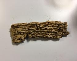 Traitement charpente -  Vannes - STRB