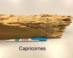 Traitement charpente Capricornes - La Baule  - STRB