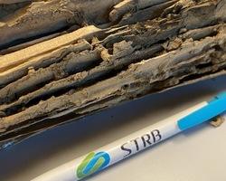 Traitement charpente termites - La Baule   - STRB